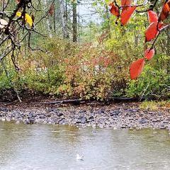 Adams River User Photo