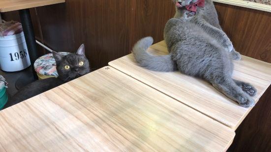 貓咪貓咪HOME