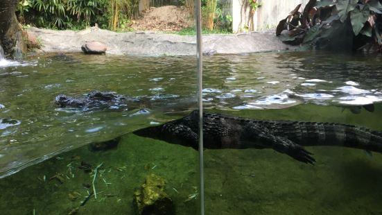Gator Marsh