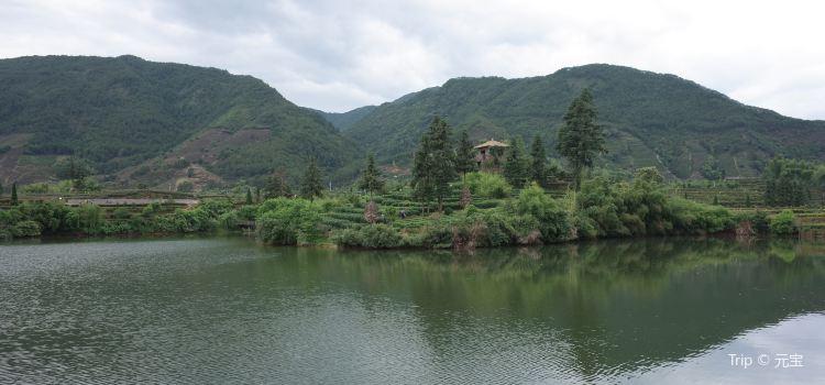 松陽大木山騎行茶園景區2