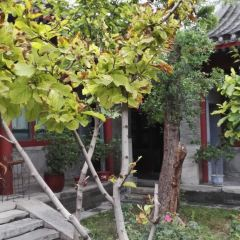 Beijing Courtyard of Lishi Alley User Photo