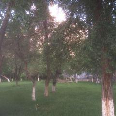 新城公園用戶圖片