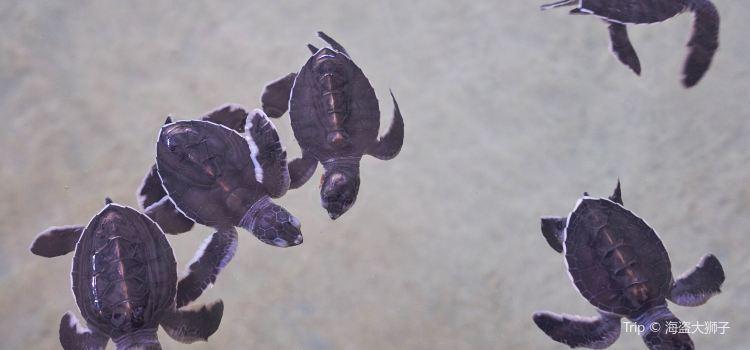 海龜孵化場3