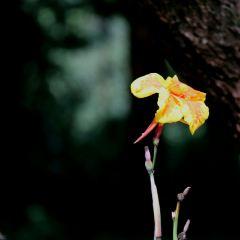 곤명식물원 여행 사진