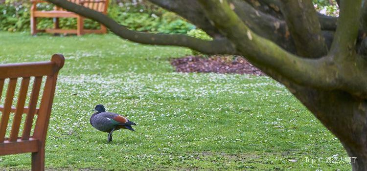Christchurch Botanic Gardens travel guidebook –must visit ...