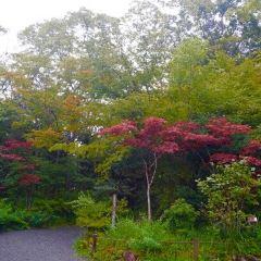 箱根濕生花園用戶圖片