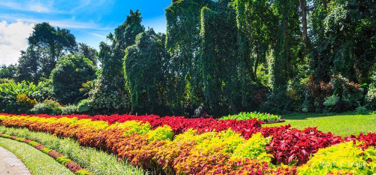 Botanical Garden (Botanischer Garten)2