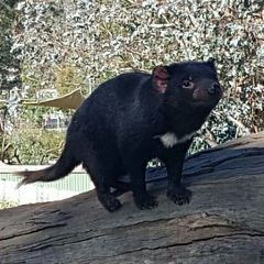 Tasmania Zoo User Photo