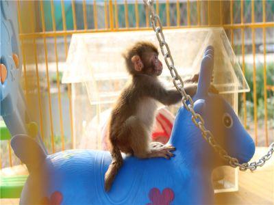 聊城動物園