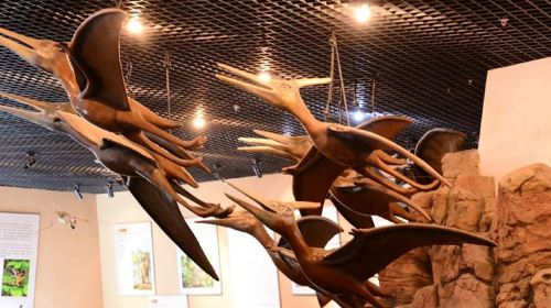 翼龍化石館
