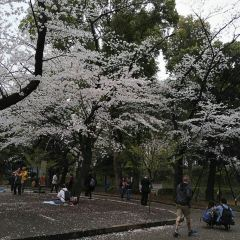 우에노 공원 여행 사진