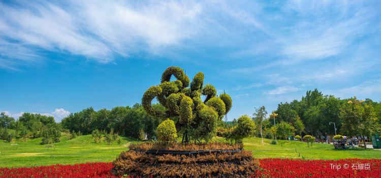 ウルムチ植物園
