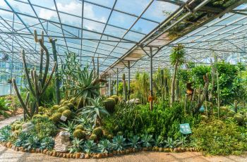 Fascinating Botanical Gardens
