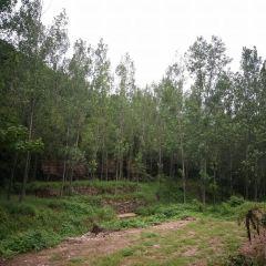 Longshan Sceneic Area User Photo