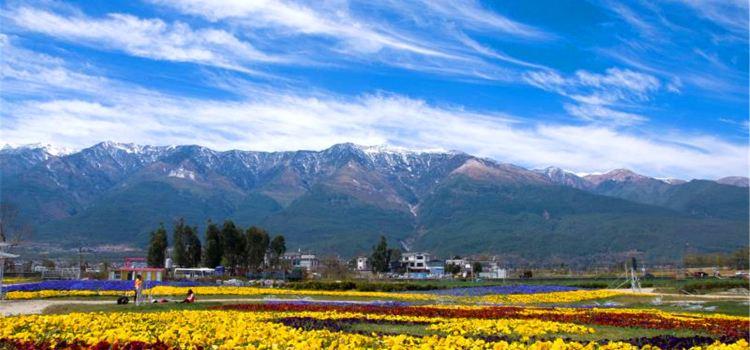 Yunhai Fangcao Flower Garden Expo Park2