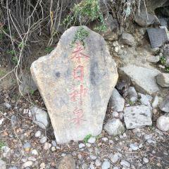 苯日神泉用戶圖片