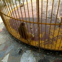 Liaocheng Zoo User Photo