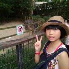 상하이 동물원 여행 사진