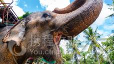 民丹岛大象公园