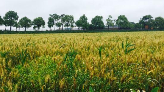 Taisheng Farm (chongming)