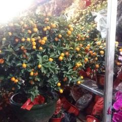 Liwan District Jasmine Flower Market User Photo