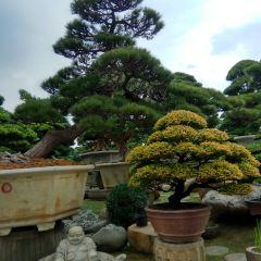 Chencun Flower World User Photo