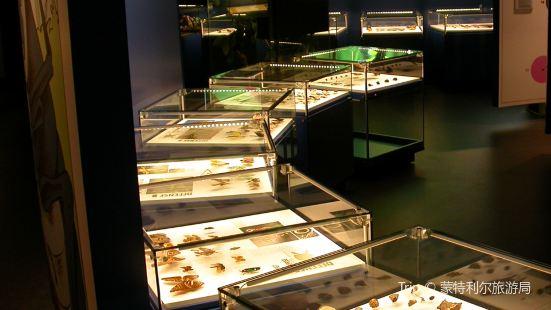 Montreal Insectarium