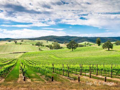 Barossa valley Estate Winery