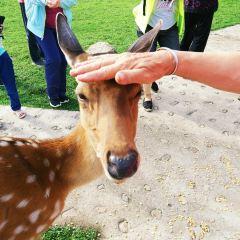 Jinshan Deer User Photo