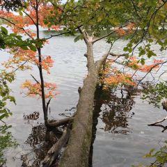 Oak Ridges Corridor Conservation Reserve Trail User Photo