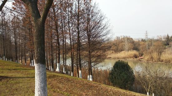 Wetland Park of Ancient Yellow River