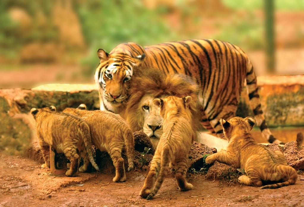 海南熱帯野生動植物園