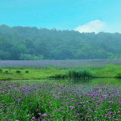 Baroco Eco Valley User Photo