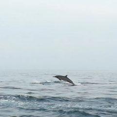 Lovina Beach User Photo