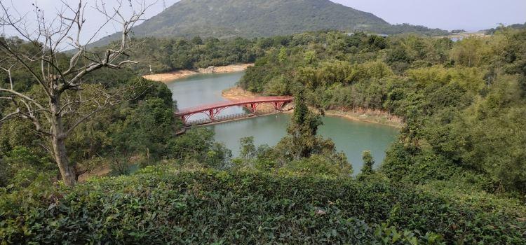 Sanzhou Tea Garden3