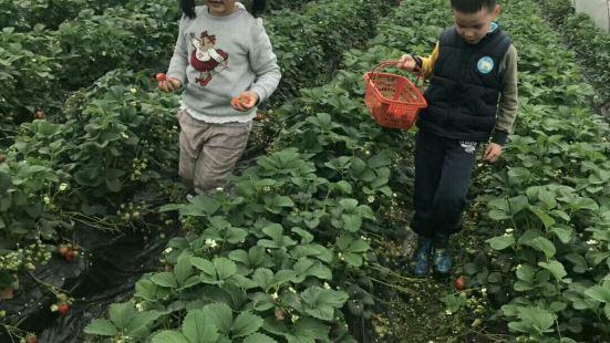 小薑草莓園