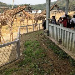 杭州野生動物世界用戶圖片