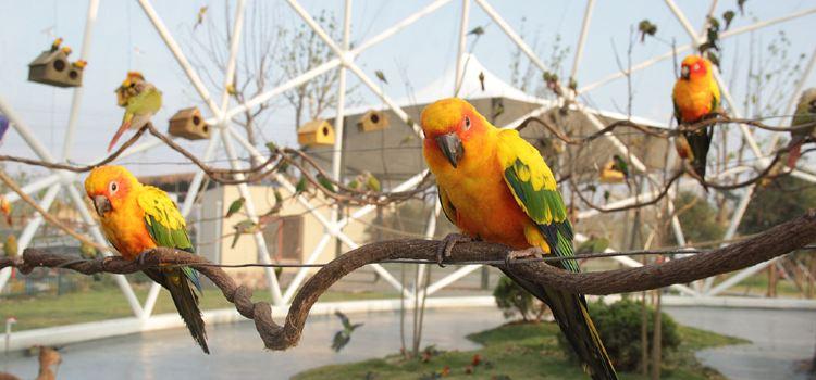太陽錐尾鸚鵡展區1