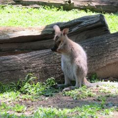Mirimar Koala Cruise User Photo