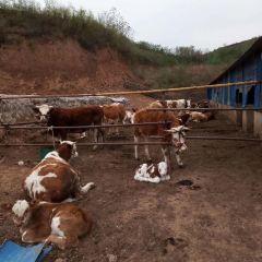 Fusui Zhongxuchang User Photo