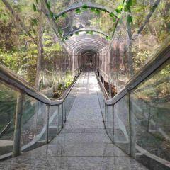 石牛寨風景區用戶圖片