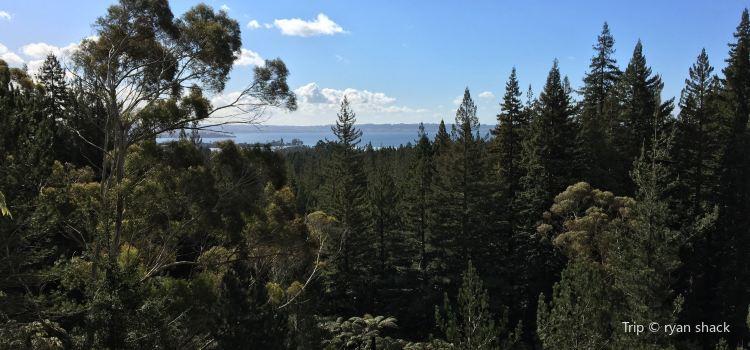 Redwoods, Whakarewarewa Forest1