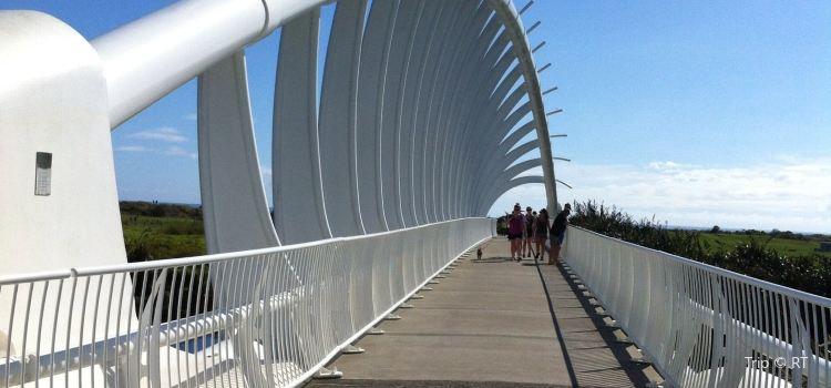 Te Rewa Rewa Bridge2