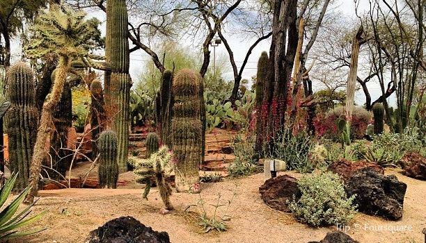 Cactus Gardens2
