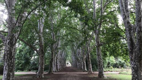 KwaZulu-Natal National Botanical Garden