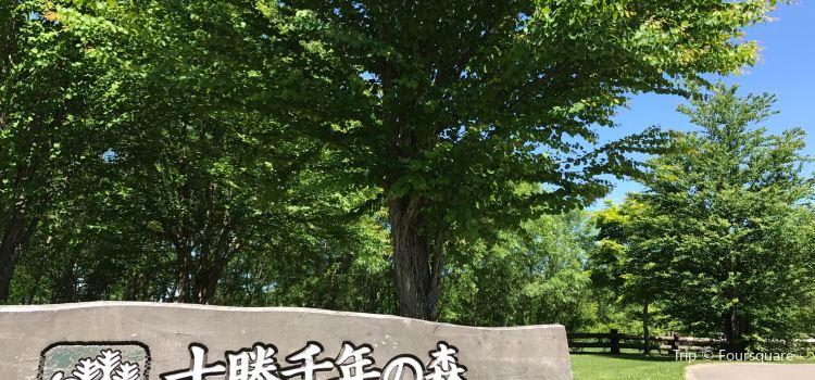 Tokachi Millennium Forest1