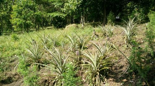 Tooro Botanical Gardens