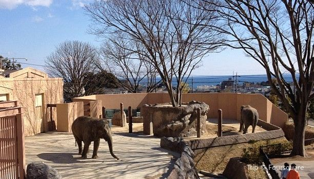 日立市かみね動物園3
