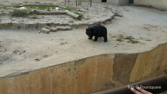 Bahawalpur Zoo