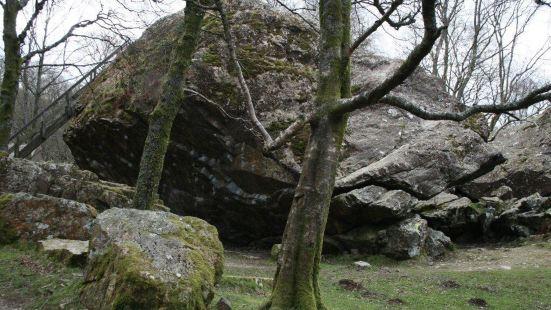 Abriachan Forest